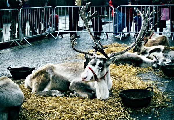 reindeers in the city by martushka